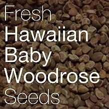 2018 FRESH Hawaiian Baby Woodrose HBWR Seeds Argyreia Nervosa Hawaii Strain (500+ seeds)