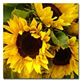 Trademark Fine Art Sunflowers by Amy Vangsgard Canvas Wall Art, 18x18-Inch