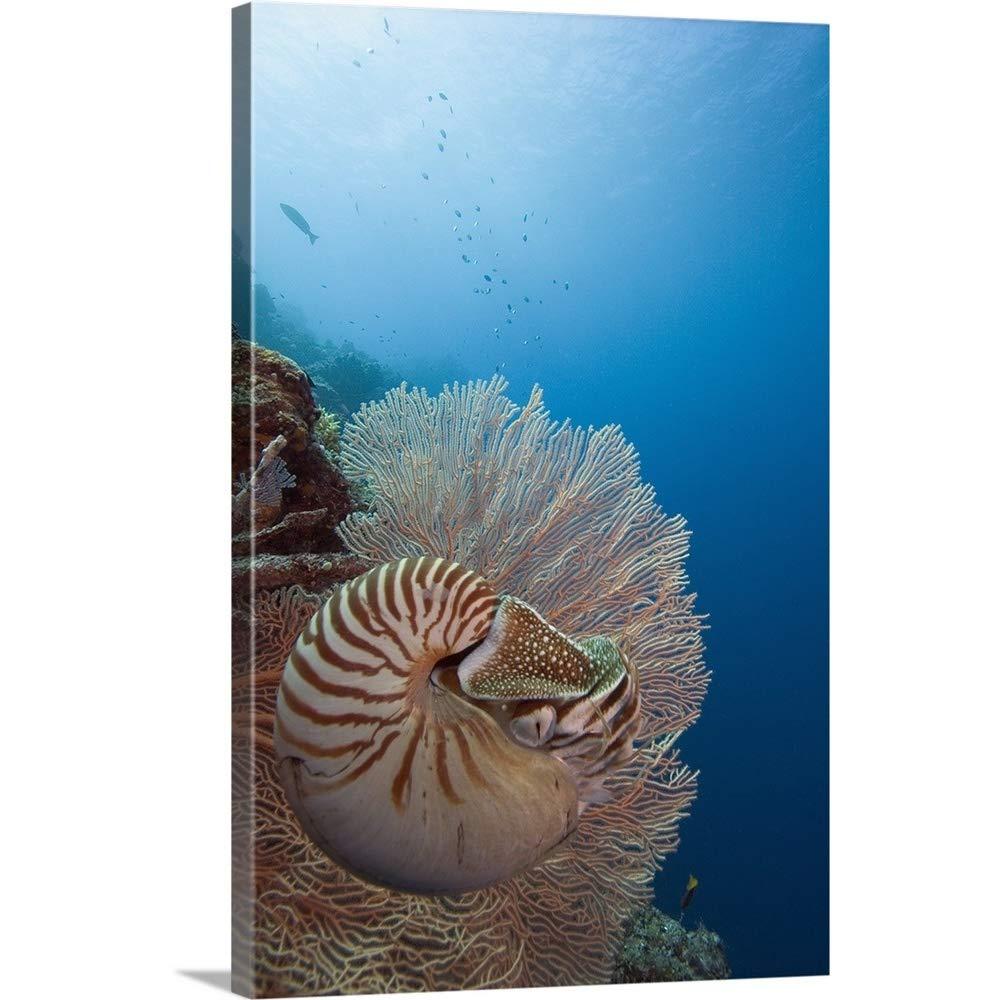 Dave Fleethamプレミアムシックラップキャンバス壁アート印刷題名Micronesia、Palau、Chambered Nautilus ( Nautilus Pompilius )フローティングamongコーラル 32