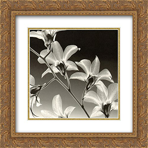 Orchid Meyers - Orchid Denrobium 2X Matted 15x18 Gold Ornate Framed Art Print by Steven N. Meyers