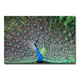 Teal Wall Art Painting Peacock Courtship Prints On Canvas The Picture Animal Pictures Oil For Home Modern Decoration Print Decor For Bedroom
