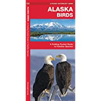 Alaska Birds: A Folding Pocket Guide to Familiar Species (Wildlife and Nature Identification)