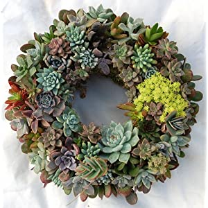 "15"" Sphagnum Moss Living Wreath Round, Natural-organic Original Plus Package of 50 Topiary Pins 3"