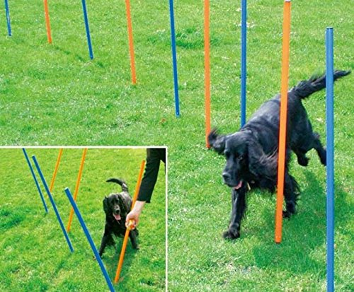 Agility Equipment - Crazy4pets.co.uk