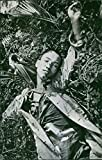 Reprint of Japanese soldier dead body lying in the forest.