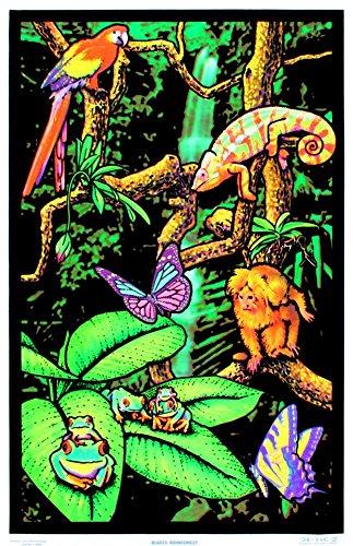 rainforest poster for kids