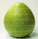 20PCS Thai Green pomelo seeds Grapefruit tree seeds fruit seeds Rare Organic health plants for home garden planting