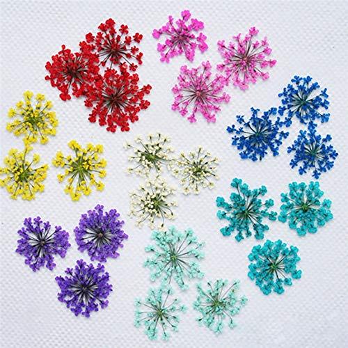 MUNCANADRO 60pcs/Set Pressed Dried Ammi Majus Flower Dry Plants for Epoxy Resin Pendant Necklace Jewelry Making Craft DIY Accessories