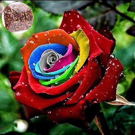 20//50Pcs Selten Hellblau Rose Blumen Samen Garten-Duft Bonsai Pflanze Deko