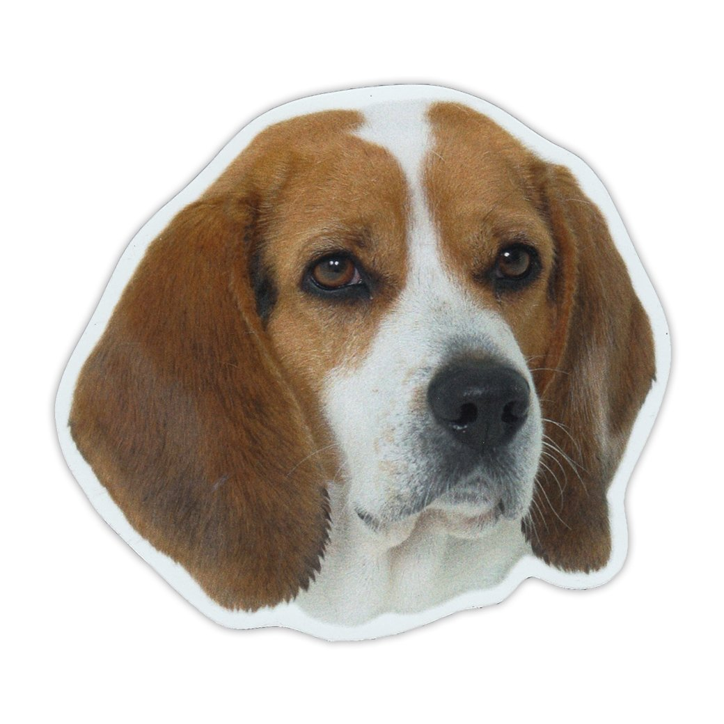 "Refrigerator Magnet - Beagle Dog Breed Picture Magnet - 5"" x 4.5"""