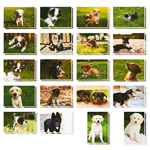 Puppy Dog Postcards – 40 Postcards – Bulk Set – Cute All Occasion Design – Golden Retrievers, Rottweilers, Husky, & More – 4 x 6 Inches