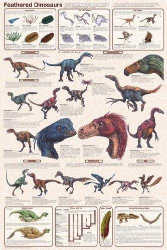 Laminated Feathered Dinosaurs Educational Science Chart Pos