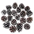 """besttoyhome 20-Piece Snow Tipped Real Natural Dried Pine Cones Frosted Pinecones Ornaments 2"""" - 3"""" Tall for Home Decor Christmas Winter Xmas Rustic Country Decoration"""
