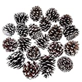 besttoyhome 20-Piece Snow Tipped Real Natural Dried Pine Cones Frosted Pinecones Ornaments 2'' - 3'' Tall for Home Decor Christmas Winter Xmas Rustic Country Decoration
