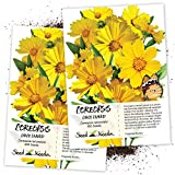 Seed Needs, Lance Leaved Coreopsis (Coreopsis lanceolata) Twin Pack of 800 Seeds Each