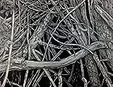''Mangrove III'' Drawing by Dawn Rosendahl ~Original Pencil Drawing