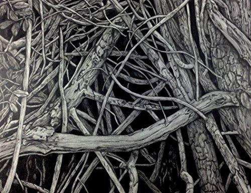 ''Mangrove III'' Drawing by Dawn Rosendahl ~Original Pencil Drawing by Artist Eye Studios