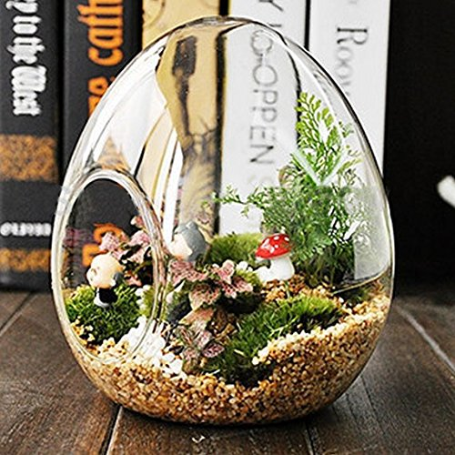 Efavormart 6 pcs EGGcellent Surprise Glass Terrarium/Decorative Clear Glass Globe