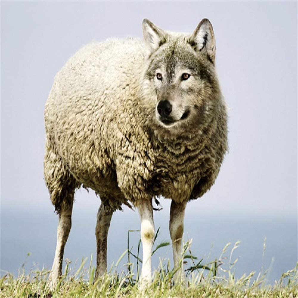 Disfraz de lobo de oveja lienzo pintura al óleo caligrafía póster ...
