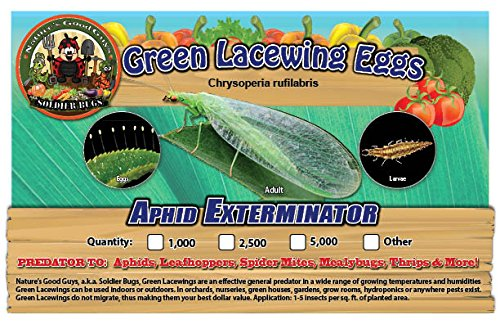 Green Lacewing 2,500 Eggs - Good Bugs - Aphid Exterminator (Live Green)