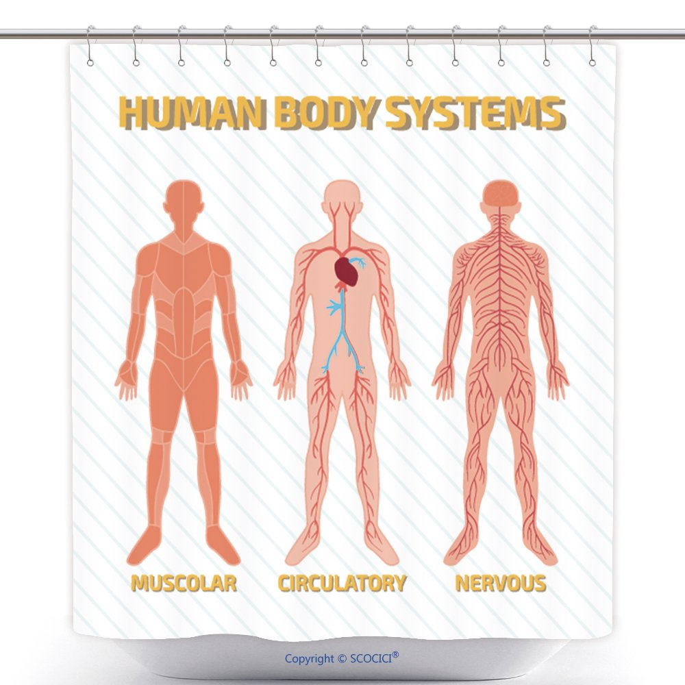 Amazon Vanfan Durable Shower Curtains Human Body Systems