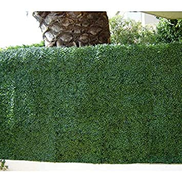 Haie de buis PVC - 1 m2 vert 9 m2: Amazon.fr: Jardin