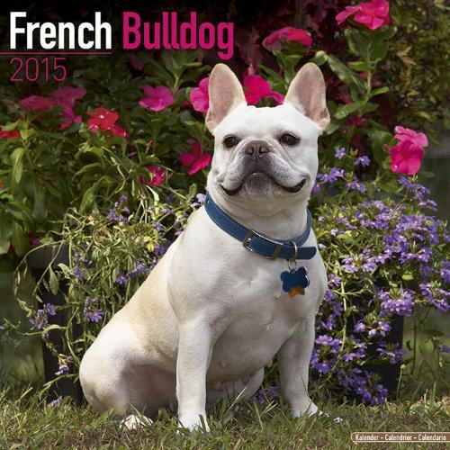2015 calendars bulldog - 5
