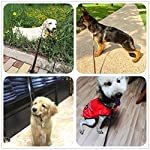 Premier-6-Foot-Dog-Leather-Training-Leash-Waist-Braided-Lease-Leads-Made-from-Leather-Great-Option-for-Large-Medium-Hunting-Dogs-or-General-Obedience-in-the-Backyard