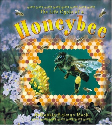 Honeybee (Life Cycle of A...(Paperback))