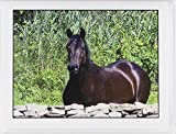 """""""Equine Friends"""" Blank Note Cards"""