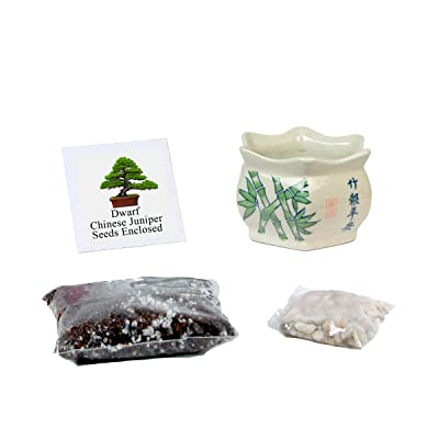 Eve's Garden Chinese Juniper Penjing Bonsai Seed Kit Asian Style Small, Woody, Complete Kit to Grow Chinese Juniper Penjing Bonsai Tree from Seed : Garden & Outdoor
