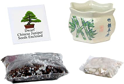 Amazon Com Eve S Garden Chinese Juniper Penjing Bonsai Seed Kit Asian Style Small Woody Complete Kit To Grow Chinese Juniper Penjing Bonsai Tree From Seed Garden Outdoor
