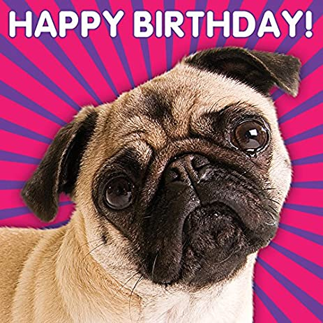 Amazon The 3d Collection Birthday Card Happy Birthday Pug