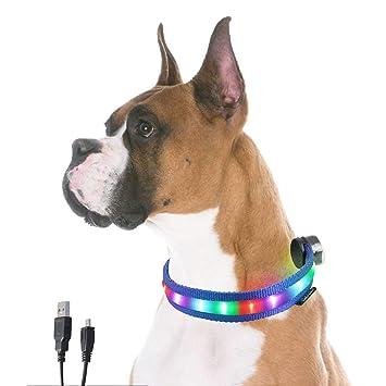 GSGD MORLIGHT Collar de Perro LED Recargable por USB con 8 Colores ...