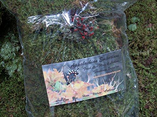 Appalachian Emporium's Live Moss Mix with British Soldier Lichen Live Fresh Moss for Terrariums Fairy Gardens Bonsai Etc. - Lichen Garden