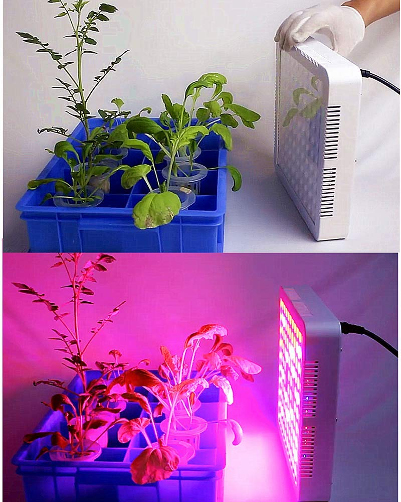 De Dinté Rdxhtqsc 420growcroissance Optimale Led Lampe Plantes Culture lcFK13TJ