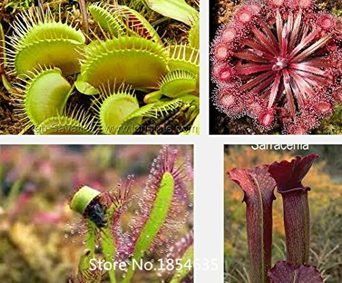 Garden Plant Carnivorous plants -100 Pitcher plants seeds flower pot planters outdoor plant garden Bonsai Seed