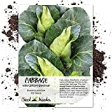 buy Seed Needs, Early Jersey Wakefield Cabbage (Brassica oleracea) 300 Seeds Non-GMO now, new 2020-2019 bestseller, review and Photo, best price $2.50