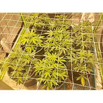 Morpheus Grow Tech Trellis Netting/Scrog Net For 2u0027x4u0027 Grow Tents with 4 Zip-tiesu0026 3 Plant Labels  sc 1 st  Amazon.com & Amazon.com : VIVOSUN Elastic Trellis Netting for Grow Tents of Any ...