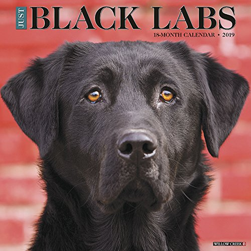 Just Black Labs 2019 Wall Calendar (Dog Breed Calendar) by Willow Creek Press