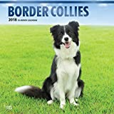 Border Collies 2018 12 x 12 Inch Monthly Square Wall Calendar with Foil Stamped Cover, Animals Dog Breeds Collies (Multilingual Edition)