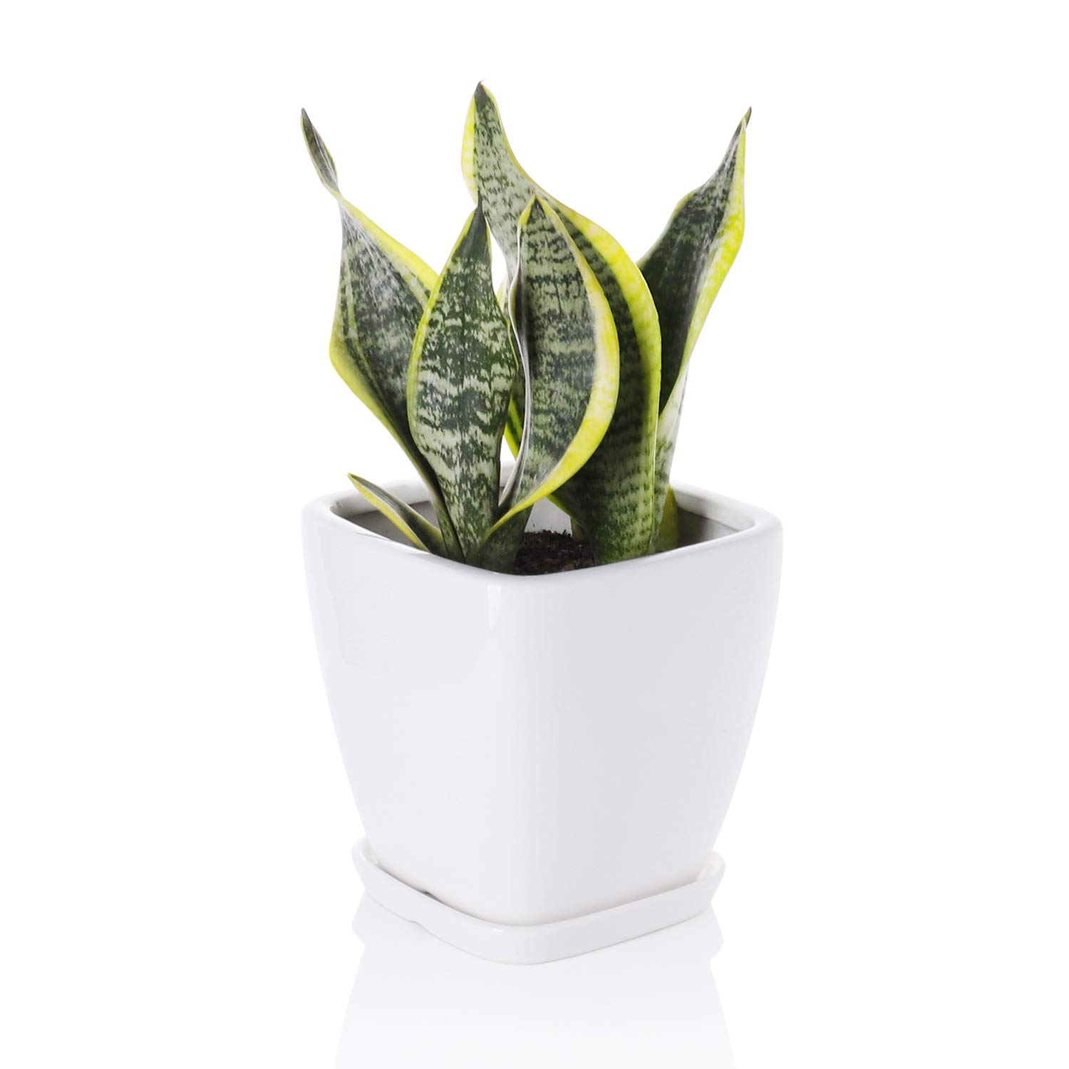 Greenaholics Succulent Pot – 5.1 Inch Square Ceramic Planter with Saucer, Flower Pot for Indoor Plant, with Drainage Hole, White