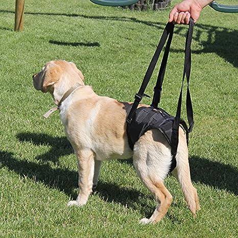 Tamaño grande Andador Perros gehilfe auxiliares Apoyo Vajilla ...