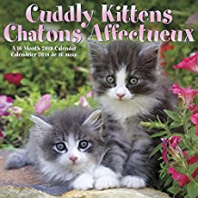 Cuddly Kittens/Chatons Affectueux 2018 Bilingual (French) Wall Calendar