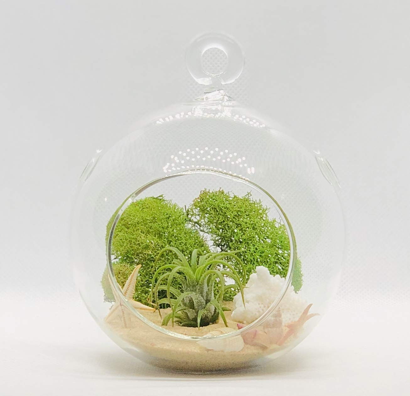 Airplant Beach Decorated Includes Glass Terrarium, Airplant, Natural Sand,Coral, Starfish, Green Moss, sea Shell
