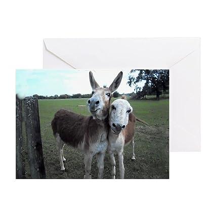 Amazon Cafepress Donkeys In Love Blank Card Greeting Cards