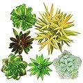 Artificial Succulent Plants Realistic Look 5 Pack