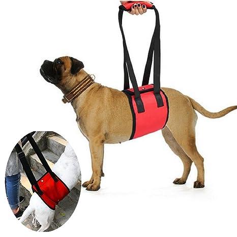 Arnés para levantamiento de perros Systond Soporte para mascotas ...