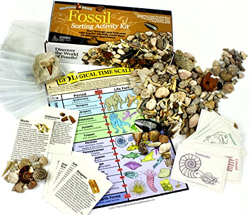 shark fossil kit - 4