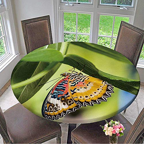"Mikihome Modern Simple Round Tablecloth Male Leopard Lacewing (Cethosia cyane euanthes) Butterfly Hanging Under Plant Decoration Washable 40""-43.5"" Round (Elastic Edge)"
